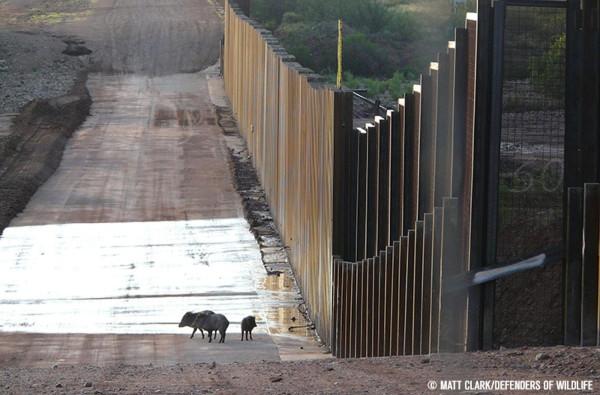边境墙011.jpg