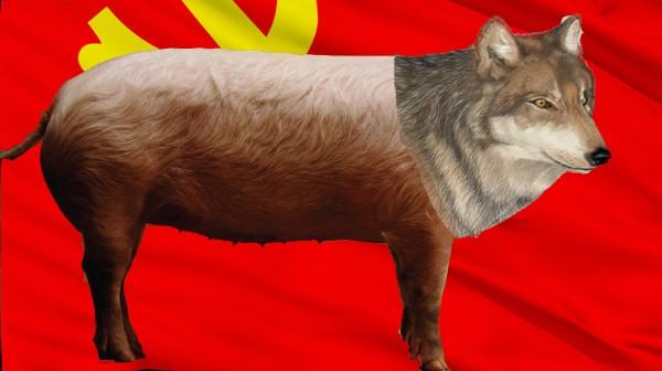 新物种:猪狼.jpg