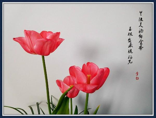 DSCN6118_副本_meitu_1.jpg