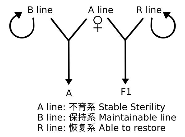 f1-three-line system.png