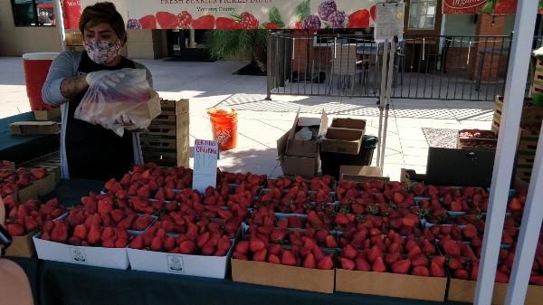 1-1 草莓摊.jpg