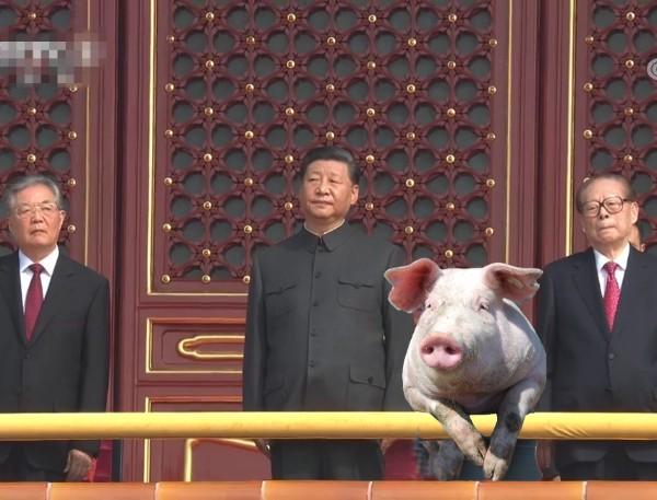 一只幸运的猪.jpg
