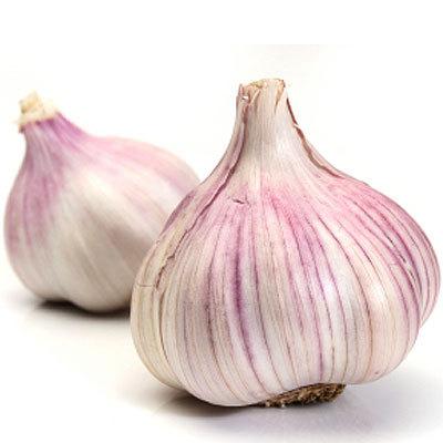 garlic-2-400x400.jpg