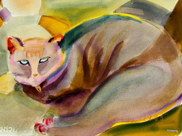 47.cat(1).jpg