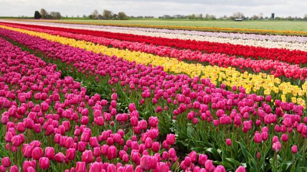 0406_FL-Keukenhof-holland-garden-01_2000x1125-1152x648.jpg