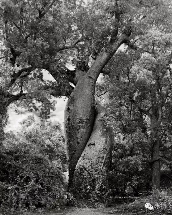 大树.jpg