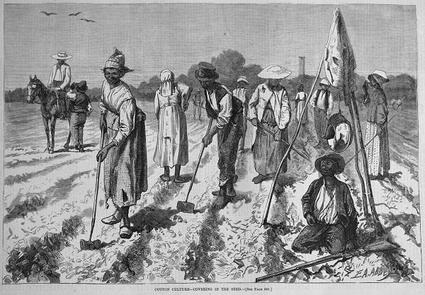 cottonculture-1875.jpg