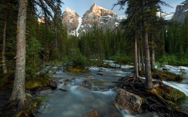 creek-forest-tree-mountain.jpg
