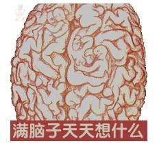 brain sex.jpg