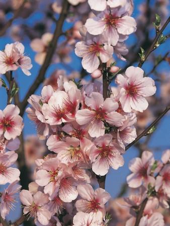 一个花季的故事2.jpg