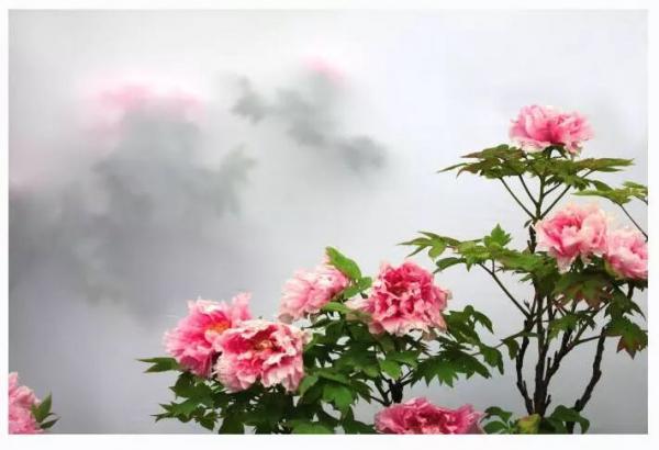 flower-23.jpg