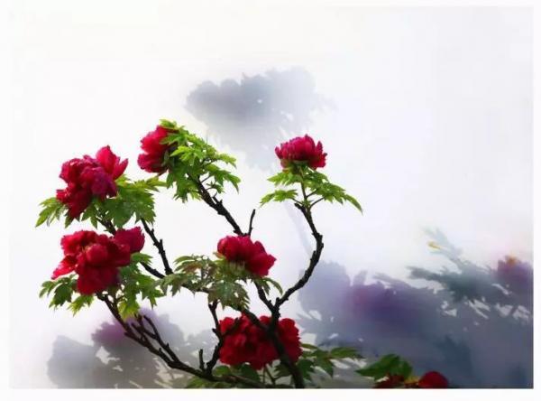 flower-24.jpg
