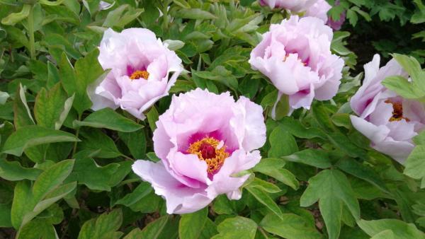 flower-20.jpg
