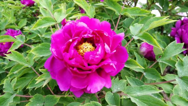 flower-18.jpg