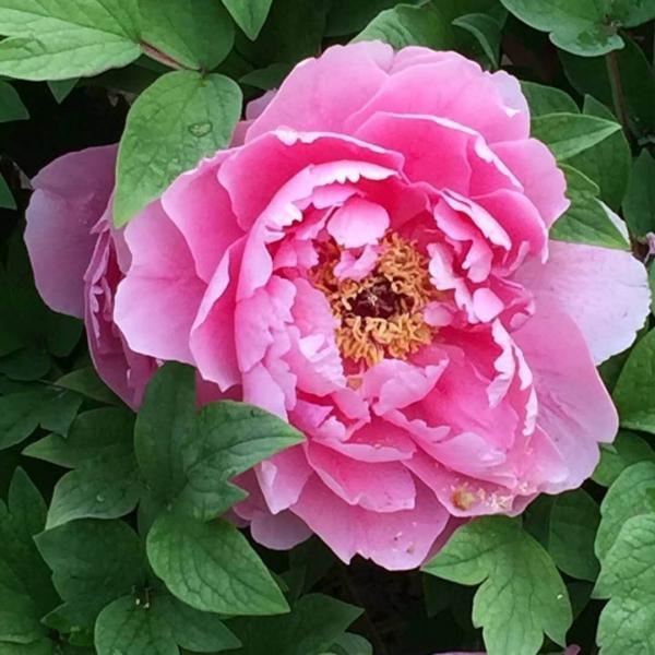 flower-17.jpg