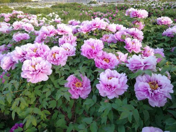 flower-13.jpg