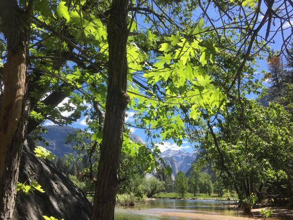 Yosemite Lake B.JPG