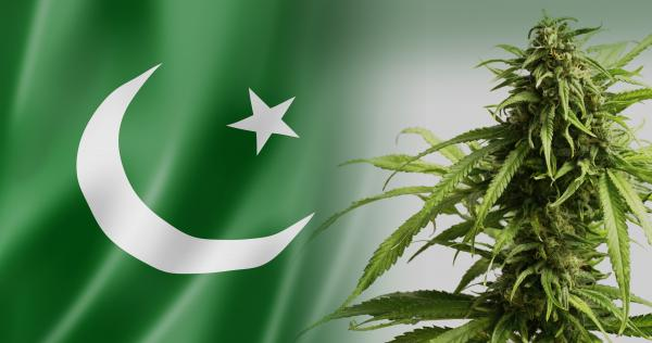 26-cannabis-in-Pakistan_4K.jpg
