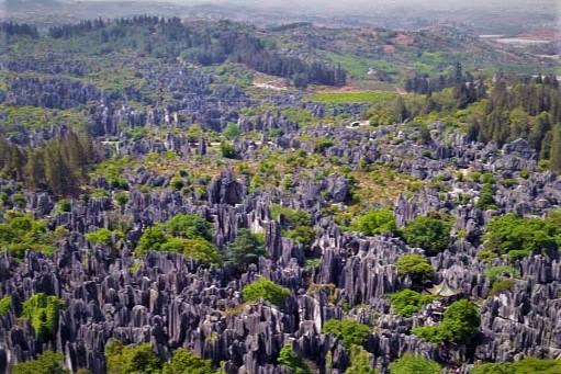 stoneforest3.jpg
