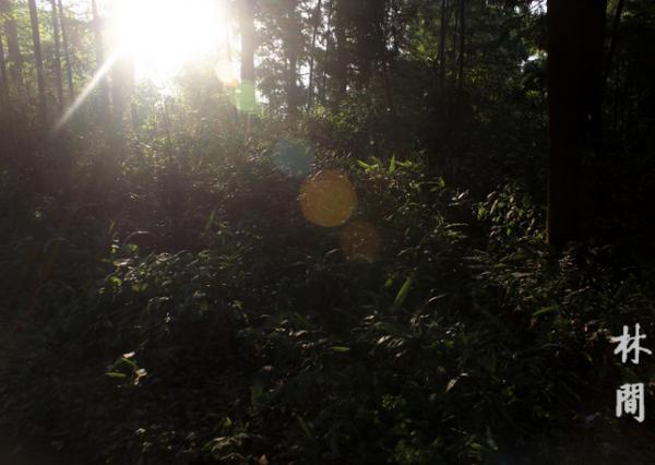 林间照.png