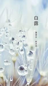 白露-1.jpg