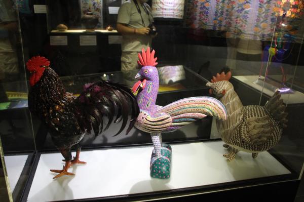 1-7 鸡.JPG