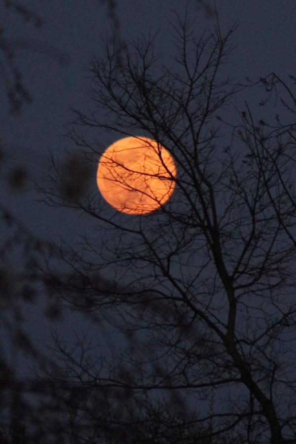 blood moon-16.jpg