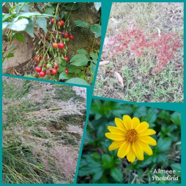 202005图片 -我家的野花.jpg